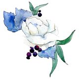 White flower. Isolated flower illustration element. Background illustration set. Watercolour drawing aquarelle bouquet. White flower. Floral botanical flower royalty free illustration
