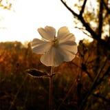 White flower. Focus on a white flower Stock Image