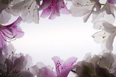White Flower Frame Over White. Background Stock Photo
