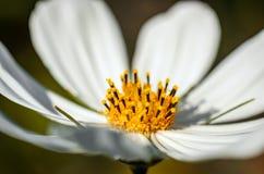 White flower garden. Royalty Free Stock Image