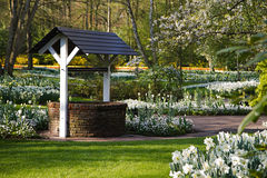 White flower garden in spring with draw-well Royalty Free Stock Photos