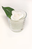 White Flower in Glass Royalty Free Stock Image