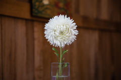 White flower in glass vase on the wooden background stock photo