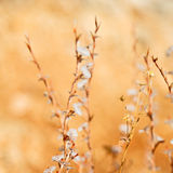 White  flower in the grass and abstract background Royalty Free Stock Image