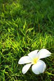 White flower on grass field stock photo