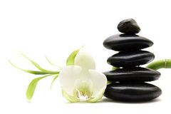 White flower, green bamboo and black stones. Isolated Royalty Free Stock Image
