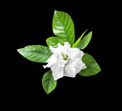 White flower and green leaf isolated Stock Photo
