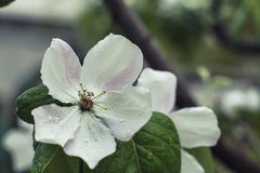 White flower. And green leaves stock photography