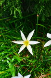 White flower. And green leaves on the tree Royalty Free Stock Photo