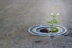 White flower growing in broken metal pipe on street Stock Images