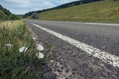 White flower growing on roadside street.  Royalty Free Stock Images