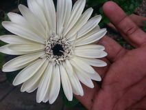 White flower. Gud natural pic Stock Images