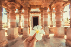 White flower in the hand of a tourist inside an ancient temple of India. Vacation mood Stock Image