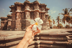 White flower in the hand of a tourist past an 12th century Hindu temple of India. Vacation mood Royalty Free Stock Images