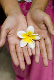 White Flower in Hands stock photo