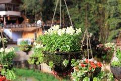 White flower hanging stock image