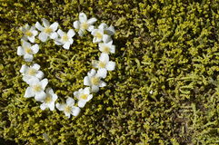 White flower heart. Heart of jasmine, jasmine heart, heart arranged with flowers, white flower heart Royalty Free Stock Photo