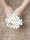 White Flower hold in hand Stock Images