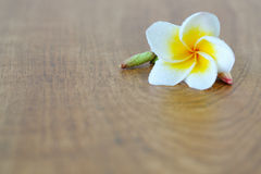 White flower. Image of white flower on wooden floor for spa concept Royalty Free Stock Image
