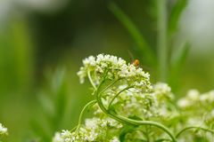 White flower with insect. Macro.small GRIP stock images