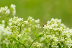 White flower with insect. Macro.small GRIP stock photos