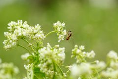White flower with insect. Macro.small GRIP royalty free stock photo