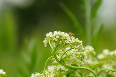 White flower with insect. Macro.small GRIP stock photography