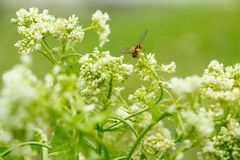 White flower with insect. Macro.small GRIP stock image