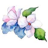 White flower. Isolated flower illustration element. Background illustration set. Watercolour drawing aquarelle bouquet. White flower. Floral botanical flower vector illustration
