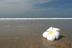 White flower land beach Stock Photos