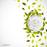 White flower and leafs on bright background. Stock Photography