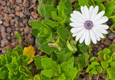 White flower on the leaves and ground background Stock Images