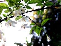 White flower. A little white flower Royalty Free Stock Images