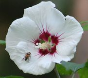 A White Flower. Really love the beauty in flowers Royalty Free Stock Image