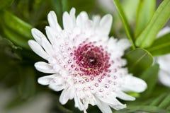 White flower macro. Image. Green background Stock Photos
