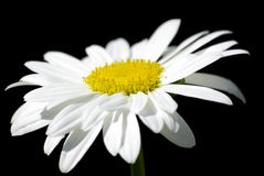 White Flower macro on black with Path. Royalty Free Stock Photos