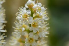 White flower, macro Stock Photos