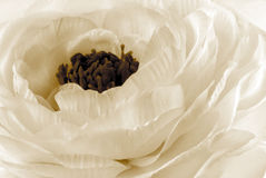 White flower macro Stock Photo