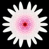 White Flower Mandala Kaleidoscope Isolated on Black Stock Photo