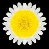 White Flower Mandala Kaleidoscope Isolated on Black Royalty Free Stock Photos