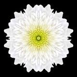White Flower Mandala Kaleidoscope Isolated on Black Royalty Free Stock Photography