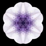 White Flower Mandala Kaleidoscope Isolated on Black Stock Image