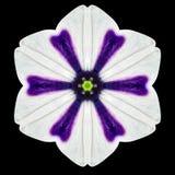 White Flower Mandala Kaleidoscope Isolated on Black Stock Photos
