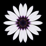 White Flower Mandala Kaleidoscope Isolated on Black. White Flower Mandala. Kaleidoscopic design Isolated on Black Background. Mirrored pattern royalty free stock images