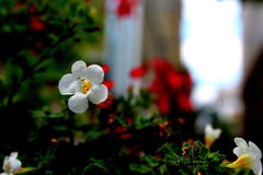 White flower. In my garden royalty free stock images