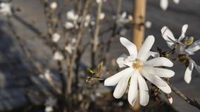 White flower in nature stock photography