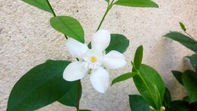 White Flower Stock Photo