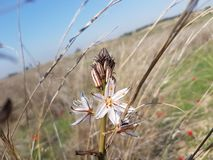White flower in an open field royalty free stock photos