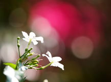 White flower outdoor natural background Stock Image