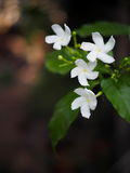 White flower outdoor natural background Stock Images